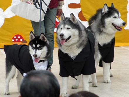 2013日獣祭