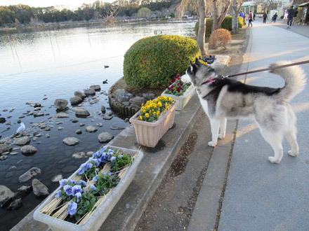 千波湖の観察