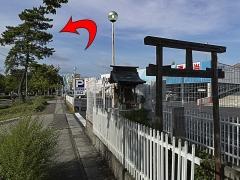 20120827小幡が原松並木