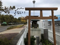 20181118小幡が原松並木