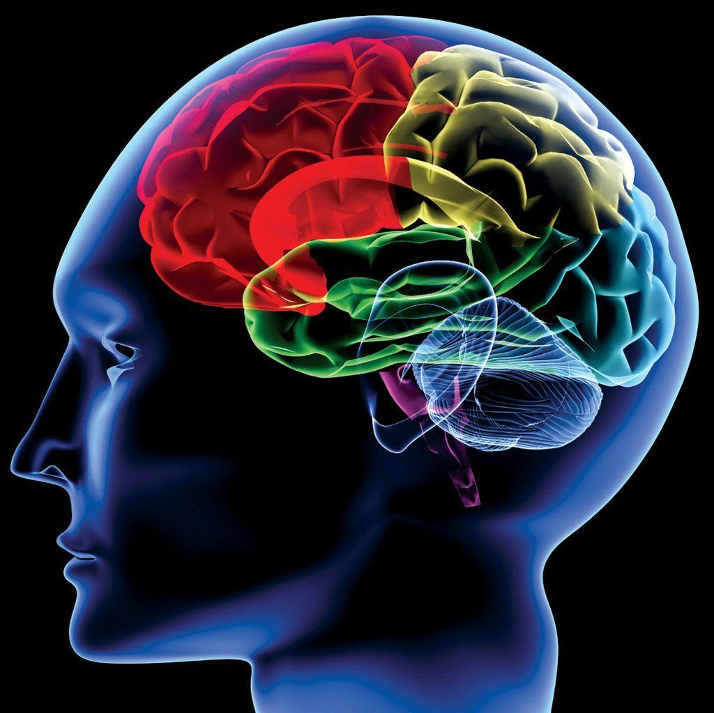 脳はすごい