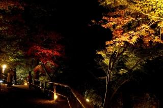 181119kitano(5).jpg