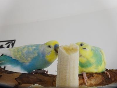 バナナまみれ