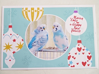 ポチさんからのクリスマスカード
