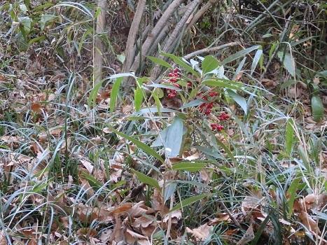 きれぎれの風彩 「縁起木」190114-1