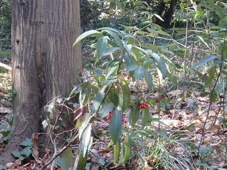きれぎれの風彩 「縁起木」190114-6