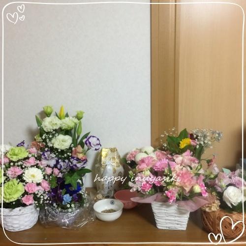 mini2018IMG_1164.jpg