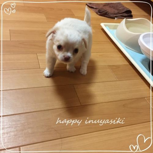 mini2018IMG_7535(2).jpg