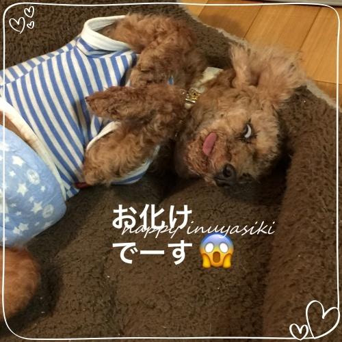 mini2018IMG_9668.jpg