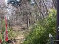 安行領家 400 興禅院境内 木立景 28