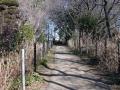 安行領家 400 興禅院境内 木立景 29