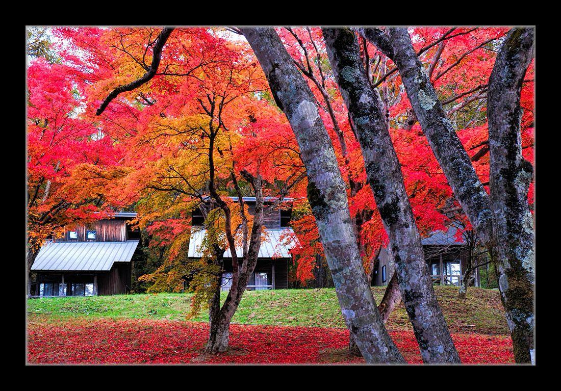 紅葉とロッジ