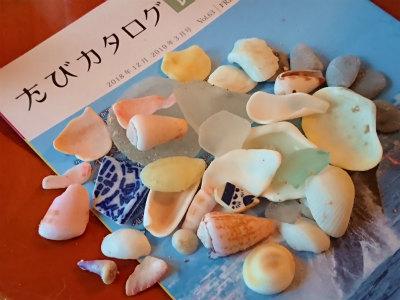 2019年1月沖縄貝殻