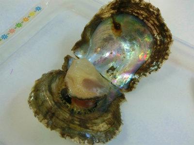 沖縄ワールド真珠とり体験2