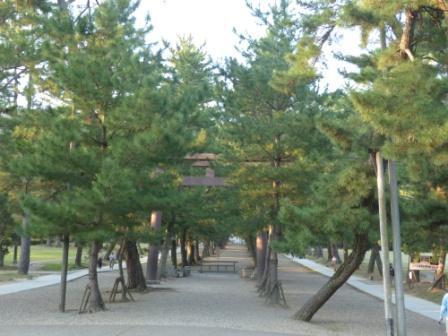 出雲大社 松の参道の鳥居