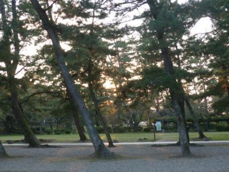 出雲大社 松の参道の夕景