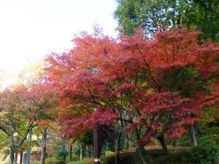 立川PA 紅葉 5