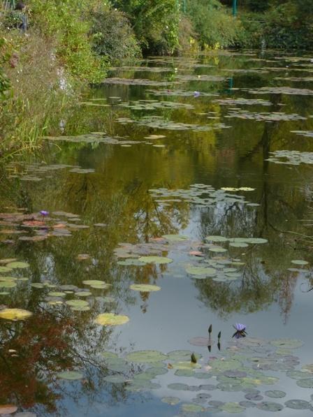 モネの庭 水の庭 7
