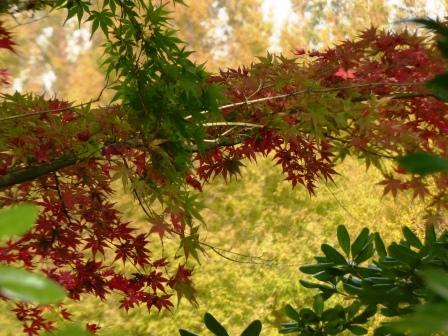 モネの庭 紅葉・黄葉 3