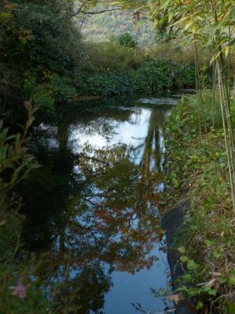 モネの庭 水の庭 5