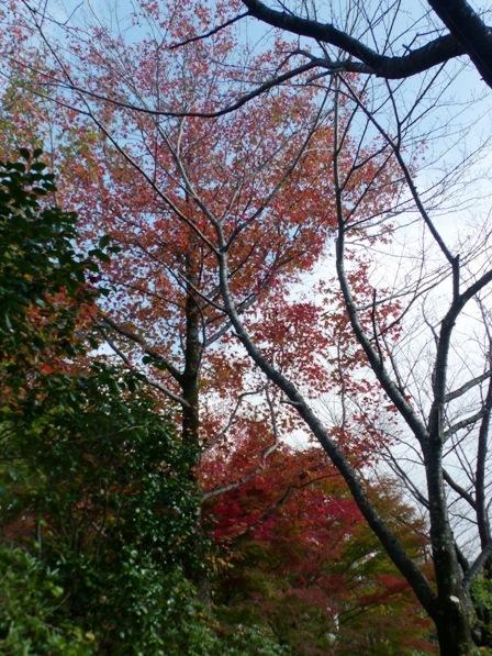 モネの庭 紅葉・黄葉 4