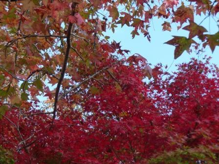 モネの庭 紅葉・黄葉 5