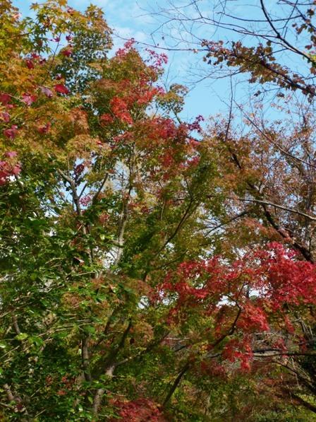 モネの庭 紅葉・黄葉 6