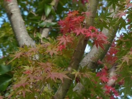 モネの庭 紅葉・黄葉 7