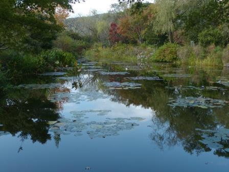 モネの庭 水の庭 4