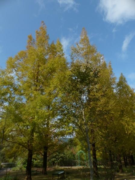 モネの庭 紅葉・黄葉 9