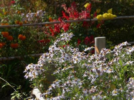 キク科の花 3