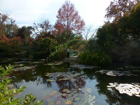 モネの庭 水の庭 1