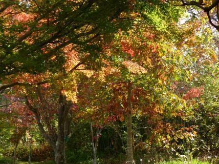 モネの庭 紅葉・黄葉 8
