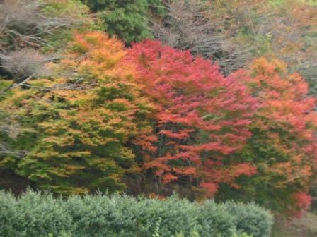 道の駅・霧の森 紅葉・黄葉 1