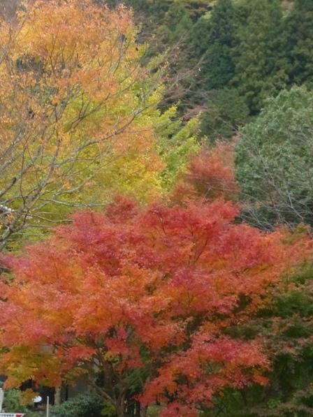 道の駅・霧の森 紅葉・黄葉 3