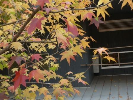 道の駅・霧の森 紅葉・黄葉 5