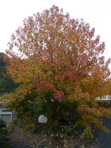 道の駅・霧の森 紅葉・黄葉 6