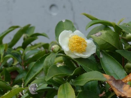 道の駅・霧の森 茶の花 1