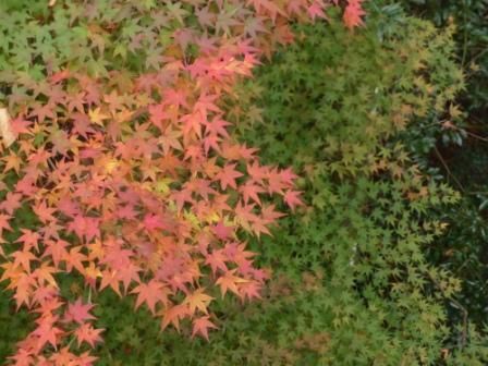 道の駅・霧の森 紅葉・黄葉 13
