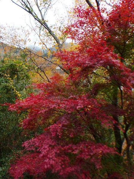 道の駅・霧の森 紅葉・黄葉 12