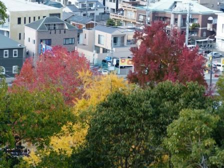 道後公園 展望台から見た紅葉・黄葉