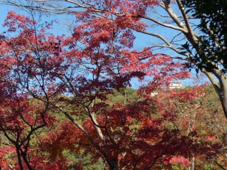 二之丸史跡庭園 紅葉 1