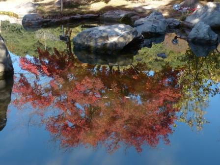 二之丸史跡庭園 紅葉 5