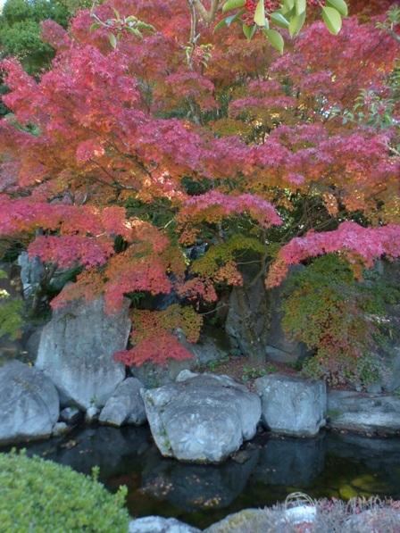 二之丸史跡庭園 紅葉 10