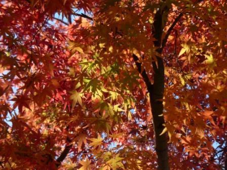 二之丸史跡庭園 紅葉 7