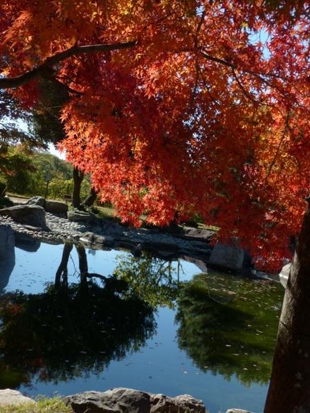 二之丸史跡庭園 紅葉 6