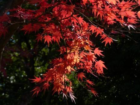 二之丸史跡庭園 紅葉 14