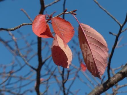 二之丸史跡庭園 紅葉 15