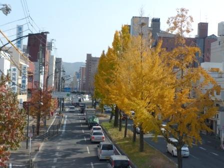 平和通り イチョウの黄葉 1