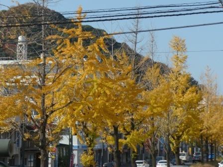 平和通り イチョウの黄葉 3